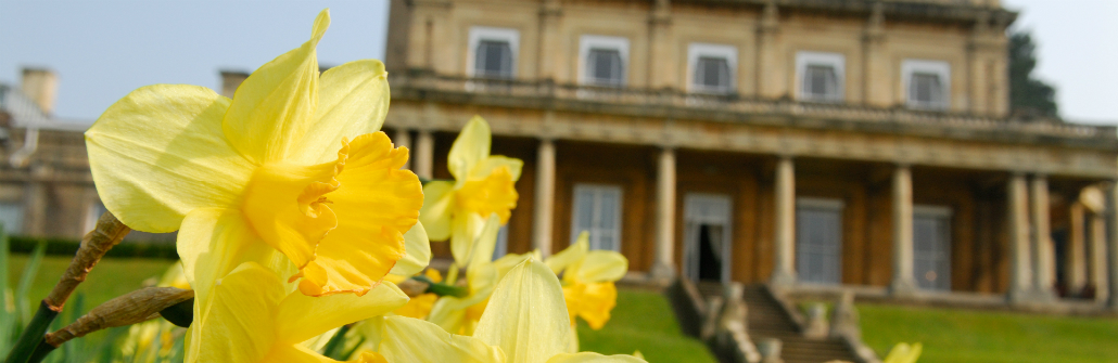 Daffodils at Headington Hill Hall