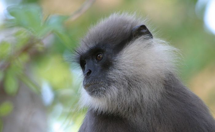 Primate conservation